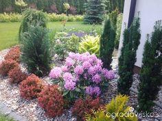 Ptasi gaj - strona 8 - Forum ogrodnicze - Ogrodowisko
