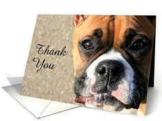 Thank You Boxer dog card Cards outer text can be changed or edited. Inside of Card is left blank so you can add your own special message. Photography Ritmo Boxer Designs