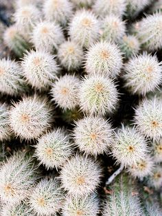 Cactus close up by Daniel Kim Photography