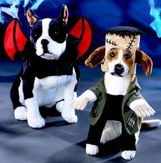 Halloween Small Dog Costume Ideas | The Hydrant