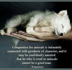 Compassion for animals is intimately connected with goodness of character; and it may be confidently asserted that he who is cruel to animals cannot be a good man. very well put! Animals And Pets, Baby Animals, Cute Animals, Animal Babies, Fur Babies, Strange Animals, Small Animals, Wild Animals, Dog Quotes