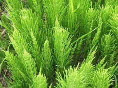 Jardinage au naturel : La fabrication des purins de plantes !   Blog Jardin Alsagarden - le magazine des jardiniers curieux