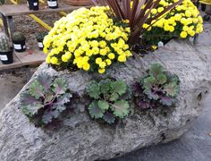 Feather Rock Planter
