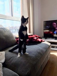 Cats standing like humans are all you need to see today