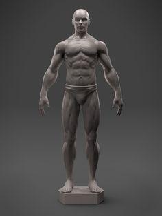 ArtStation - Male Anatomy Sculpt - 3D Asset, Hector Moran (HEC)