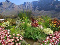 City of Capetown exhibit at Chelsea Flower Show