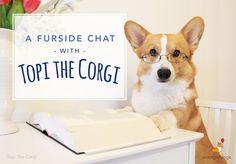 Furside Chat with Topi the Corgi – Corgi Things