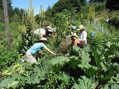 OAEC's School Garden Teacher Training supports school teams in creating and sustaining garden-based ecological literacy programs. Occidental California, Ecology Center, Water Energy, Agriculture Farming, Sustainable Energy, Backyard Projects, Permaculture, Hydroponics, Organic Gardening