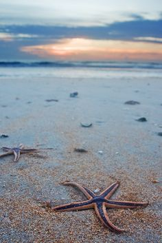 Explore Starfish Point from the nearby Stingray City Sandbar in Grand Cayman. You'll enjoy world-class snorkeling with superb visibility, numerous tropical fish, and of course, sea stars.