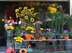 Flores sobre Palmas México City