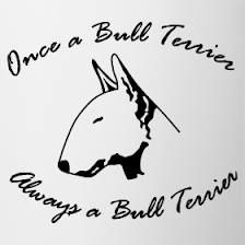 I will always be owned by a Bull Terrier!