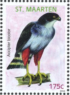 Bicolored Hawk stamps - mainly images - gallery format
