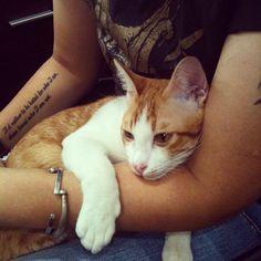 @zephyrsz- #webstagram // orange boy always sleep on my arm like my girl :)