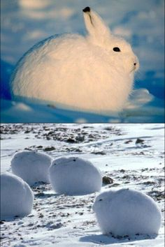its so fluffy!!!!!!!!!!!!!!!!!!!!!!!!!!!!!!!!!!!!!!!!!!!!!!!!!!!!!!!!!!!!!!!!!!!!!!!!!!!!!!!!!!!!!!!!!!!!!!!!!!!!!!!!!!!!!!!!!!!!!!!!!!!!!!!!!!!!!!!!!!!!!!!!!!
