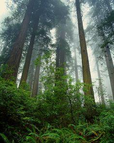 Redwood Regional park - Oakland, CA Oakland California, Northern California, East Bay Area, Hiking Spots, Park Photos, Travel Usa, Paris Travel, Tree Forest, Nature Photos