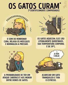 Amo gatinhos