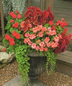 urn planting...creeping jenny, coleus, impatiens and begonia