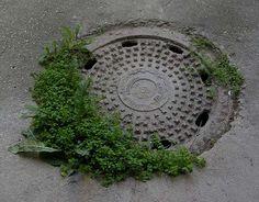 Poemas del río Wang: Guerilla gardening in Levoča