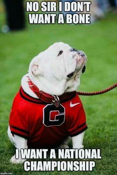 """Check out our website for more details on """"bulldog dogs"""". It is an excellent place for more information."""