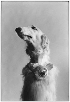 Elliott ERWITT :: New York City, 1999 (Dog portrait)