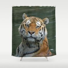 http://society6.com/product/tiger-2015-0622_shower-curtain?curator=jamfoto
