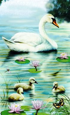This is a White Swan, raising her Cygnets — they have touchy temperaments especially when breeding & raising cygnets. Swan Painting, China Painting, Swans, Illustration Art, Illustrations, Animal Paintings, Bird Art, Belle Photo, Beautiful Birds