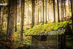 Forest Cabin, Mystical Forest, Black Forest, Posts, Facebook, Childhood Memories, Travel Report, Adventure, Woodland Forest