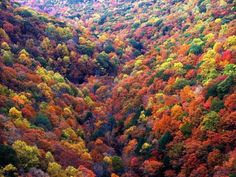 Now that is a tapestry of fall foliage.