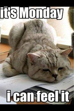 Monday's are tough!!