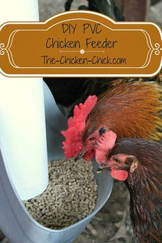 After much research I decided to design my own DIY PVC feeder. There are no longer piles of wasted grain on the floor, which makes me, my chickens, & my feed budget happy. Pvc Chicken Feeder, Easy Chicken Coop, Chicken Garden, Chicken Chick, Backyard Chicken Coops, Backyard Farming, Chickens Backyard, Chicken Life, Chicken Houses