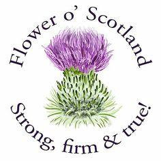 Flower o' Scotland
