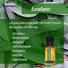 Usos y beneficios de la esencia de eucalipto