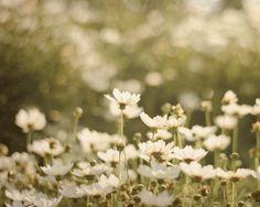 Dreamy Flower Photography 8x10, Daisy Garden Wall Decor, Baby Girl Nursery Decor, Rustic White Green Wall Art, Nature Photograph. Via Etsy.