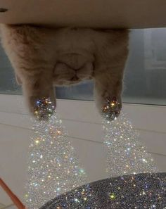 I Love Cats, Cool Cats, Kittens Cutest, Cats And Kittens, Photowall Ideas, Glitter Photography, Cat Aesthetic, Cat Wallpaper, Cute Memes