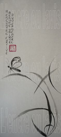 Papillon 23x50
