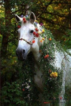 Horse wearing flowers