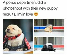 21 Wholesome Memes For a Wonderful Week : Funny Dogs Cute Animal Memes, Cute Funny Animals, Funny Animal Pictures, Funny Cute, Funny Dogs, Cute Puppies, Cute Dogs, Dogs And Puppies, Chien Golden Retriever
