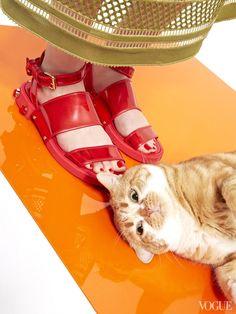 http://www.itfashion.com/moda/observatorio-de-tendencias/entre-gatos-y-sandalias/