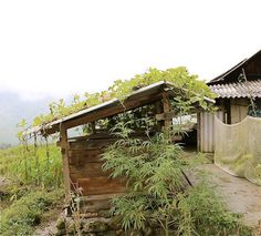 X Sa Pa, Vietnam, Cabin, House Styles, Home Decor, Decoration Home, Room Decor, Cabins, Cottage