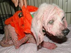 Please Share--23 Hoarder Dogs with Mange/Infections | Medical Expenses - YouCaring.com