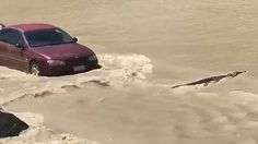 Footage shows car honking its hooter at a crocodile in flood waters