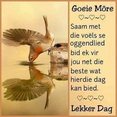 Lekker Dag, Goeie More, Afrikaanse Quotes, Morning Blessings, Good Morning Quotes, Morning Greeting, Funny Quotes, Deep Thoughts, Poems