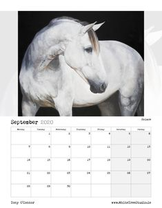 Tony O Connor 2020 Equine Art Calendar Limited Edition Art Calendar, Equine Art, Life Is Good, Sketches, Horses, Artist, Animals, Image, Beautiful