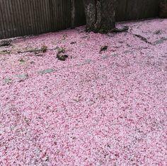 Nature blossom in pi