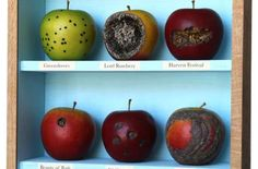 John Dilnot Explores Mortality's Beginning and End Through Apples #food #art