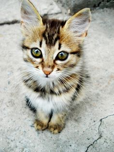 What a pretty kitty ♥