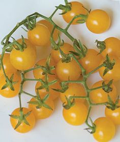 Tomatoes-I like 5 or 6 different type's around. Good to shop for at Farmer's Mkt. Local grown