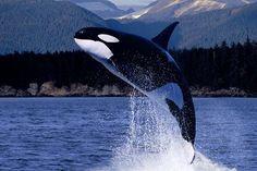 Le migliori destinazioni per fare whale watching