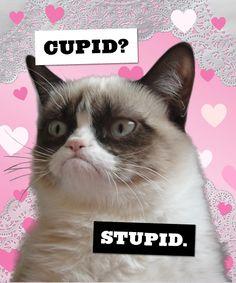 Happy Valenti—oh, never mind. #meow #GrumpyCat #Tard #TarderSauce #meme #LOL…