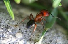 ANTS:  [Article] Natural Ways to Get Rid of Ants in your Home